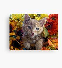 Di Milo ~ Perplexed ~ Fall Kitten Canvas Print