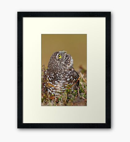 Scanning The Sky/ Burrowing Owl Framed Print