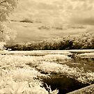 Wekiva River II  by Shane Jones
