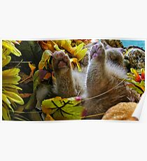 Di Milo ~ Belly up ~ Fall Kitten Poster