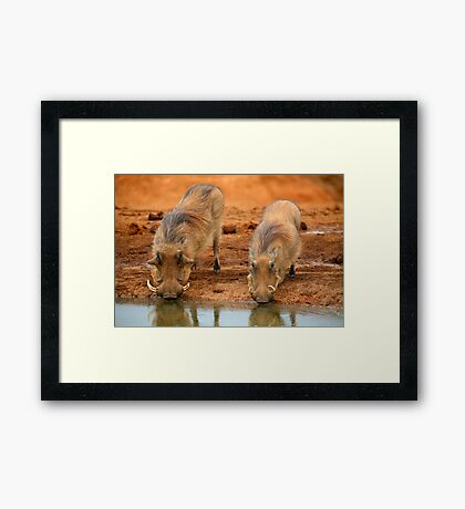 Warthogs At Waterhole Framed Print