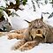 Animals in Snow