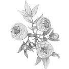 Peonies flowers by MadliArt