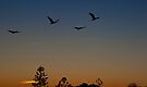 First Flight by Odille Esmonde-Morgan