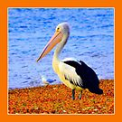 PELICAN by Rose Frankcombe