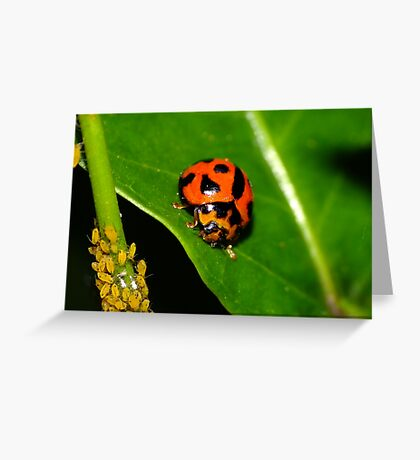 Lady Bird & Aphids Greeting Card