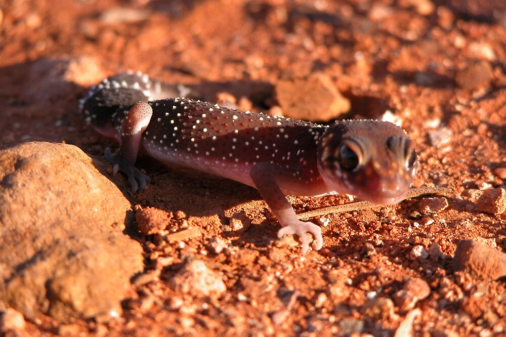 Thick-tailed Gecko by EnviroKey