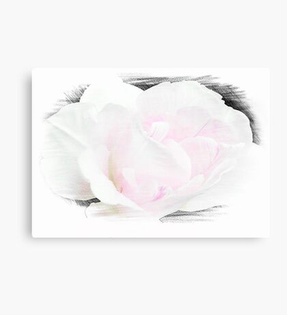 Summer's Rose © Canvas Print
