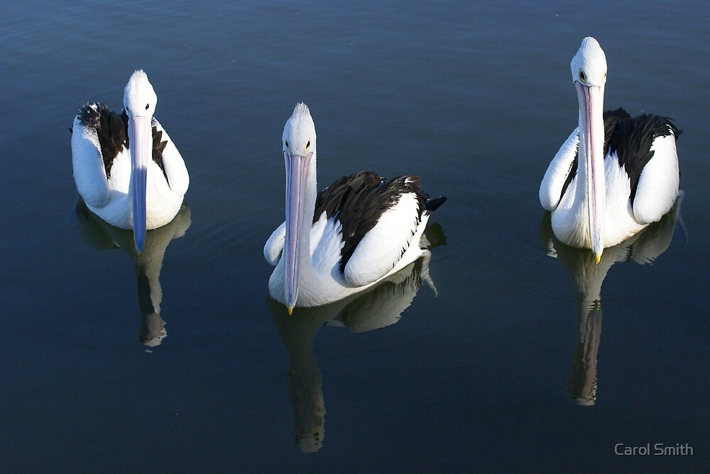 Pelican Reflection by cs-cookie