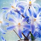Spring Stars by Beth Mason