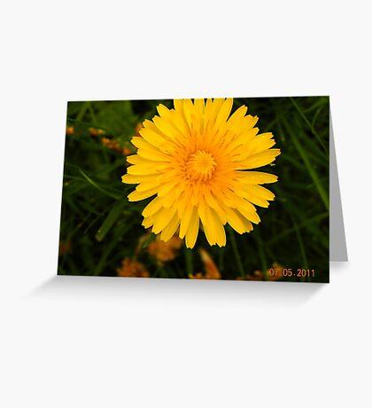 Lone dandelion  Greeting Card