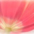 Matthaei Tulip by Beth Mason