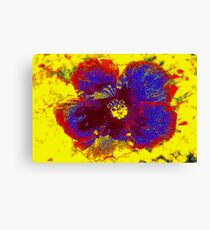 Hibiscus colors Canvas Print