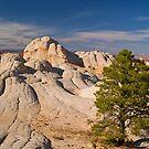 Lone Tree at White Pocket, Arizona by Alex Cassels