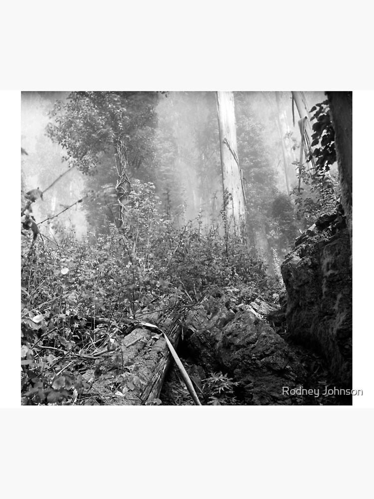 Eucalypti of Mount Sutro by rodneyj46