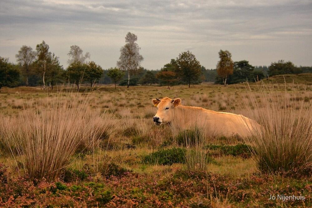 Its a Cow by Jo Nijenhuis