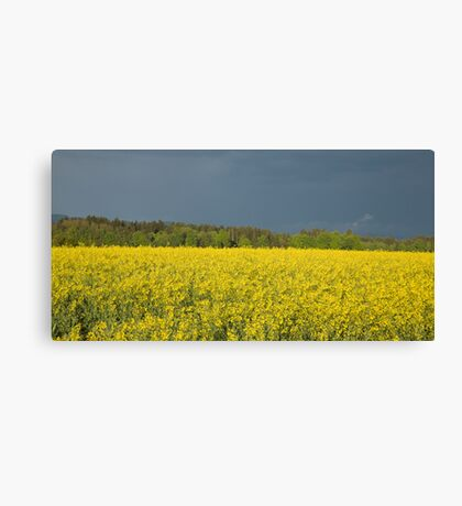 rapeseed field with storm clouds in background, Brnik, Slovenia. Canvas Print