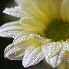 Rained On by Lynne Morris