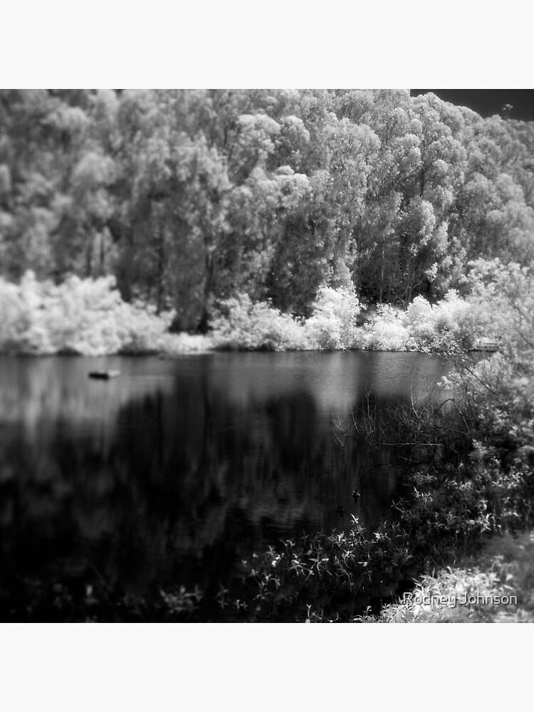 Pine Lake by rodneyj46