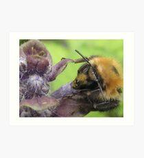 bumbley bumble bee Art Print