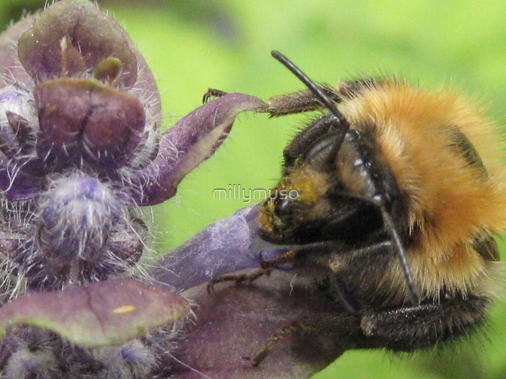 bumbley bumble bee by millymuso