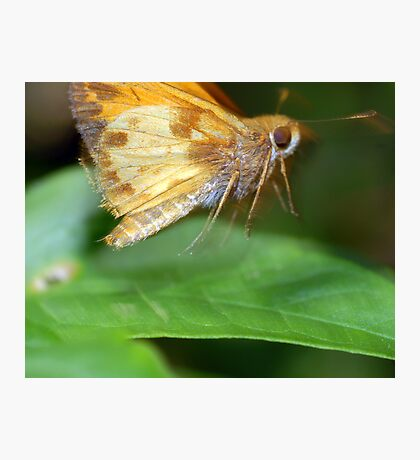 Moth On The Move Photographic Print