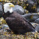 The Eagle Has Landed..... by Lisa Baumeler
