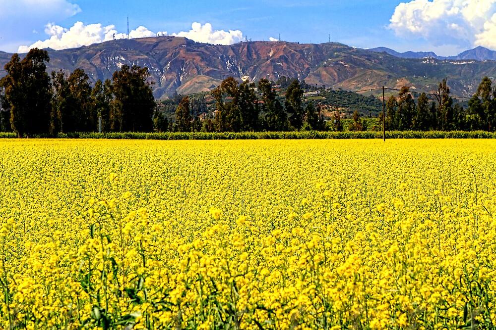 Yellow flower field by mariann kovats redbubble yellow flower field mightylinksfo Images