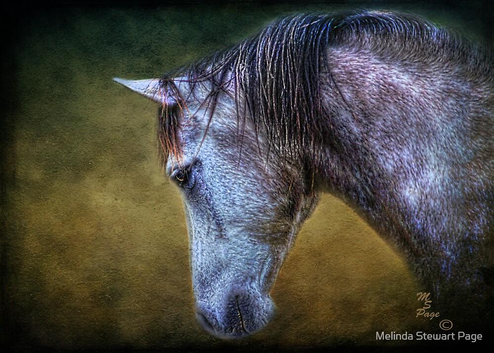 """Traveler"" by Melinda Stewart Page"