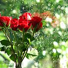 Rose in front of rain drops by RKLazenby