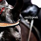 Intense Focus by Emily Peak