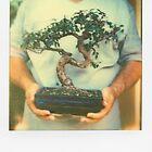 Mini Tree by MoiMM