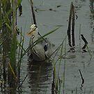 fishy heron by jaffa