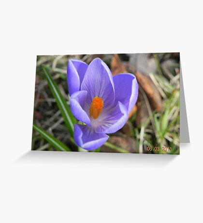 Crocus-Spring in the woods Greeting Card