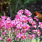Hummingbird and the Columbine Flowers  by Chuck Gardner