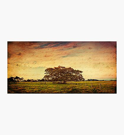 ~ the fig tree ~ Photographic Print