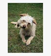 furry dog Photographic Print