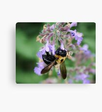 Just Bee Canvas Print