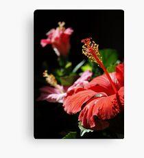 Multicolored Hibiscus Canvas Print