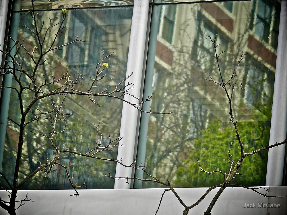 Reflections Behind The Branches - Portland - Oregon by Jack McCabe
