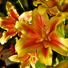 Sunlite Flowers Of the Rainbow Flower Shop - San Diego - California *featured by Jack McCabe