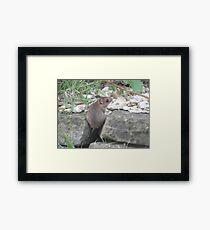little field mouse Framed Print
