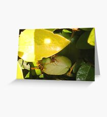Paper Wasps Greeting Card