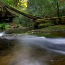 Downstream Waitui by craigmason