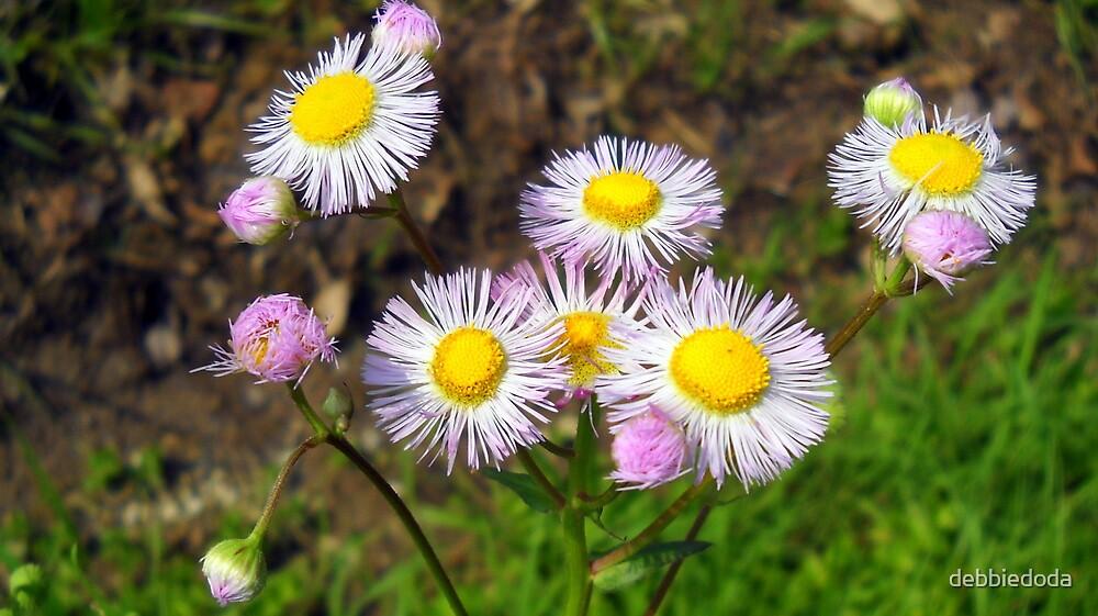 Daisy Close-Up by debbiedoda