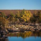 The Dam by Daphne Johnson
