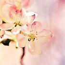Promise of Spring by Amandalynn Jones