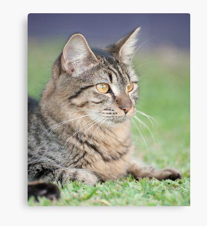 Puss Canvas Print