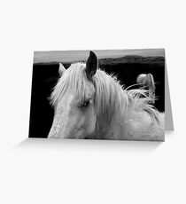 Horse (4-16) Please check the link .. !!! Greeting Card