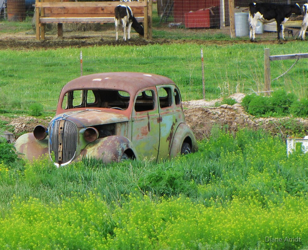 Put Out To Pasture by Diane Arndt